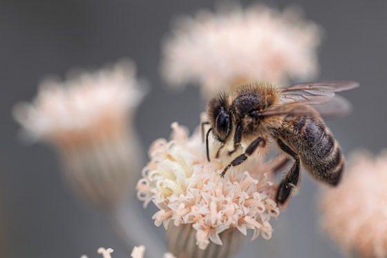 Bienen Natur Gesund Yoga