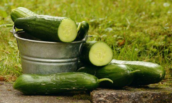 Gurken als vitaminreiche Nahrung